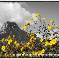 El color de la llibertat_Josep Pellicer.jpg